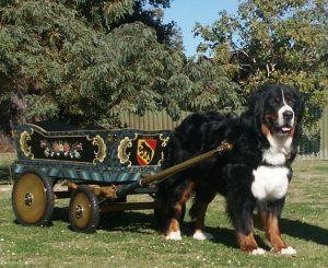 Toby & cart