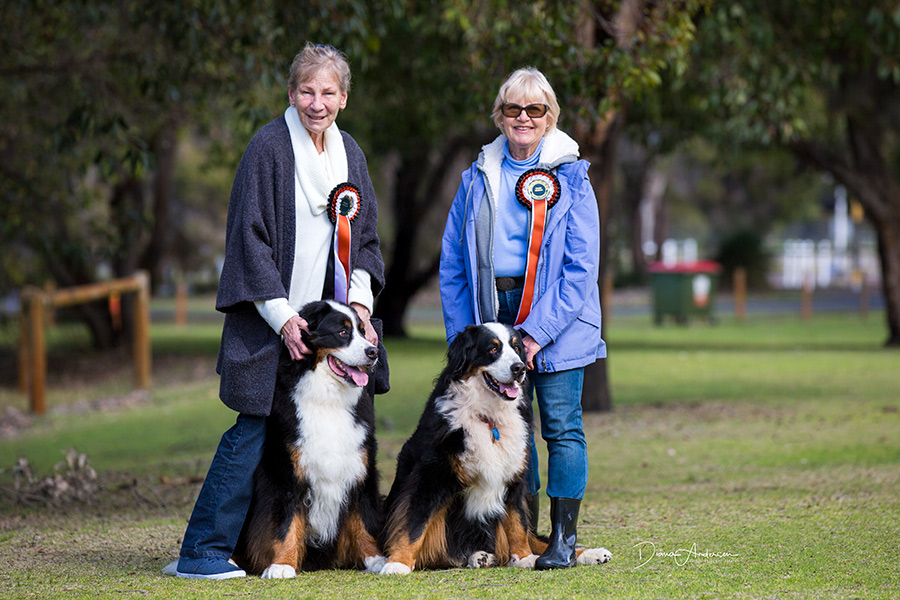 prize winning dogs